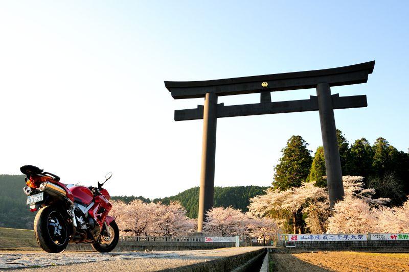大鳥居と桜。