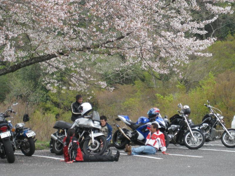 桜を求めて、ツーリング