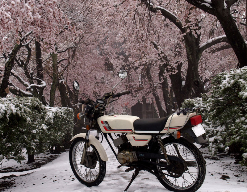 季節外れの雪です