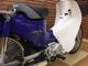 thumbnail スーパーカブ110 スーパーカブ110 国内生産 ワンオーナー 全国のバイク王からお探しのバイクを見…