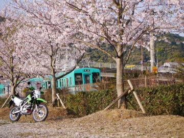 桜とKLちゃん | Webikeツーリング