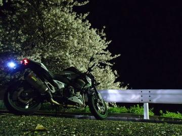 音戸の瀬戸の白桜   Webikeツーリング