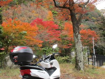 紅葉を探しに、近場ツーに! | Webikeツーリング