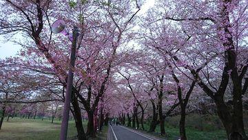 花桃と桜を見に!2年振りの渡瀬渓谷&赤城ツー☆ | Webikeツーリング