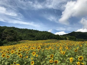 喜多方経由で会津まで | Webikeツーリング