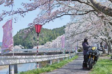 2019.04.09 桜ツーリング(2) | Webikeツーリング
