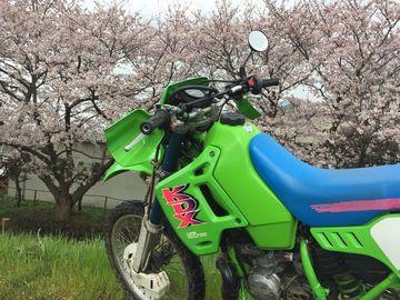 桜咲く。 | Webikeツーリング