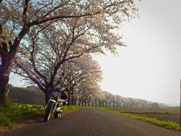 VanVan散歩 桜の名所巡り'2015 SLもあるよ♪   Webikeツーリング