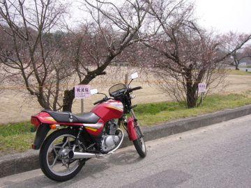 桜が恋しい季節 | Webikeツーリング