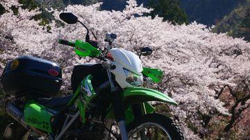 いよいよ平成最後の桜も見納め!?十津川村・熊野市ツーリング♪ | Webikeツーリング