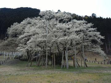 樹齢1500年は伊達じゃない | Webikeツーリング
