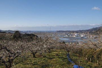 みなべ梅林&南伊勢町の河津桜を見に行ってきました | Webikeツーリング