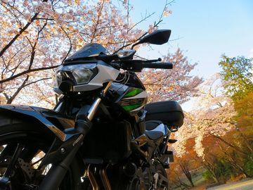 やっと桜に会えた,嵐山高雄パークウェイ | Webikeツーリング