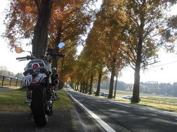 2020/11/17 メタセコイア並木紅葉を見に行く~! | Webikeツーリング