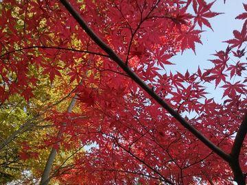 成田山、紅葉狩り | Webikeツーリング