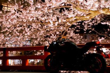 夜光る桜 | Webikeツーリング