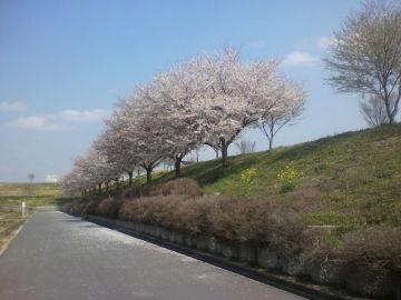 桜とSR   Webikeツーリング