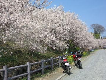 丹沢湖へ散歩♪ | Webikeツーリング