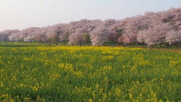 桜咲きましたね! 月並みですが桜日記です(^_^) KJC写真部活動日記♪ | Webikeツーリング
