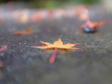 マンネリコースからの古峯神社 | Webikeツーリング