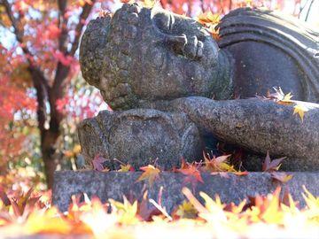 東国花の寺 埼玉一番 西善寺 コミネカエデ  | Webikeツーリング