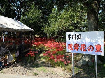 2018 早川渕 彼岸花の里 | Webikeツーリング
