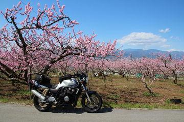 山梨,気ままなバイク一人旅/桃の甲府盆地へ   Webikeツーリング