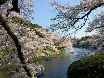 (二番)城南島と千鳥ヶ淵、桜見どきどきtoritetu部   Webikeツーリング