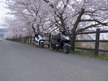 追間自然観察公園の桜並木 | Webikeツーリング