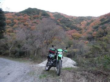 紅葉の林道 | Webikeツーリング
