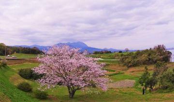 春の色探し2  | Webikeツーリング