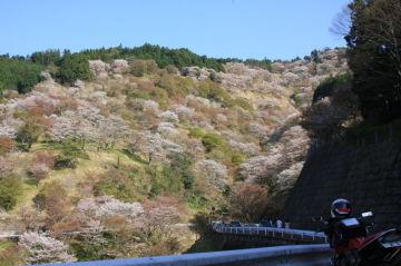 吉野山の桜とダムカード収集(^O^)/ | Webikeツーリング