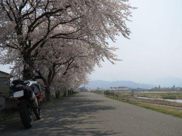 桜回廊 | Webikeツーリング