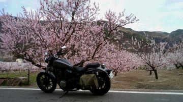 日本一の「あんず」の花見 | Webikeツーリング