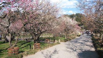 梅を見に行くツーリング。 | Webikeツーリング