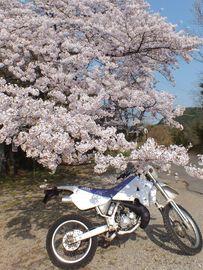 白峰寺へお花見散歩、DTのサイドスタンドが・・・ | Webikeツーリング