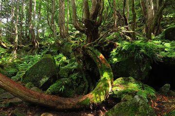 絶景!?滝探訪、その九 蓼科大滝編 | Webikeツーリング