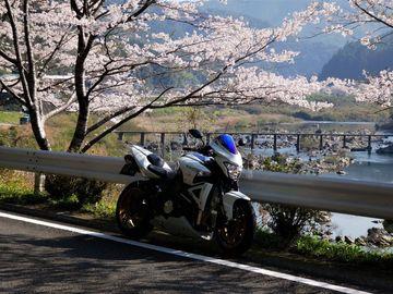 桜満開の四万十に (*^^)v | Webikeツーリング
