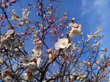 和歌山散歩 | Webikeツーリング