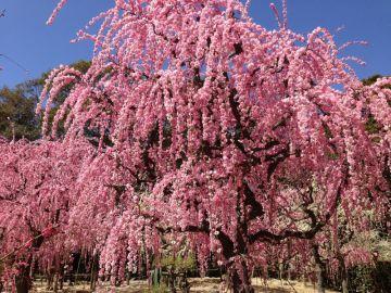 津の結城神社へ梅を見に! | Webikeツーリング