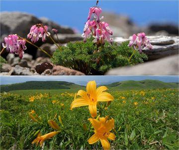 『思い出アルバム』季節の花巡りバンバン | Webikeツーリング