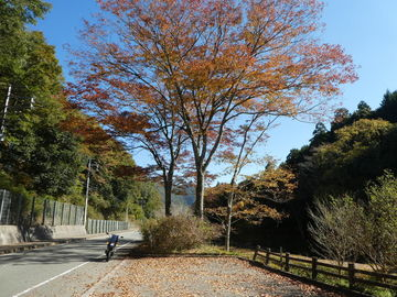 暖かかったので紅葉狩りに(天目楓の高源寺へ) | Webikeツーリング