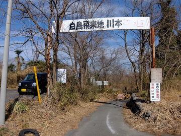 埼玉県 深谷市 白鳥飛来地は!? | Webikeツーリング