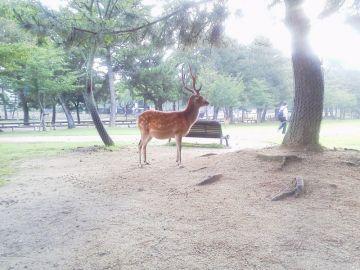 大阪に来て初めての朝餉け♪ | Webikeツーリング