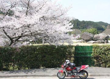 フォトコン応募写真でーす。(^O^)/ と桜めぐりツーでーす。(^_-)-☆ | Webikeツーリング
