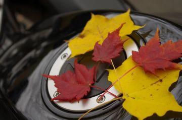 色づく季節   Webikeツーリング