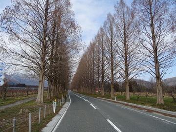 本年初の日本海側&メタセコイア並木 | Webikeツーリング