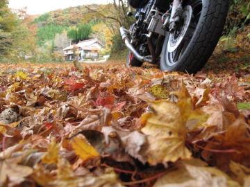 落ち葉のジュータン | Webikeツーリング