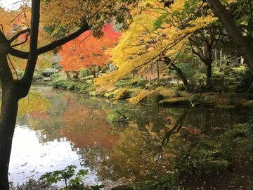 成田山新勝寺 de シトシト紅葉狩り | Webikeツーリング