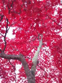今年の紅葉はすごかった   Webikeツーリング